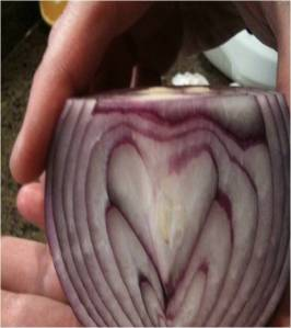 Onion Heart